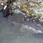 Der Plastikmüllstrudel